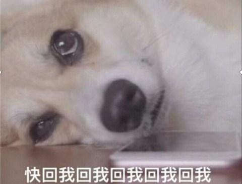 为什么那么多舔狗?如何能不做舔狗?第2张