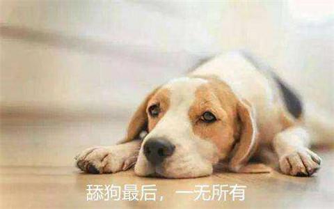 为什么那么多舔狗?如何能不做舔狗?第3张
