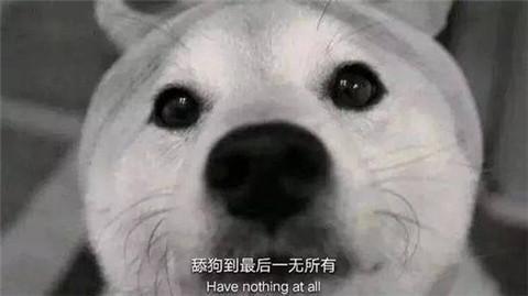 为什么那么多舔狗?如何能不做舔狗?第4张