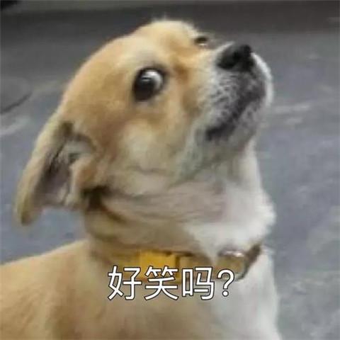为什么那么多舔狗?怎么追女生才不会沦为舔狗?第2张