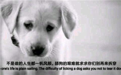 为什么那么多舔狗?怎么追女生才不会沦为舔狗?第4张