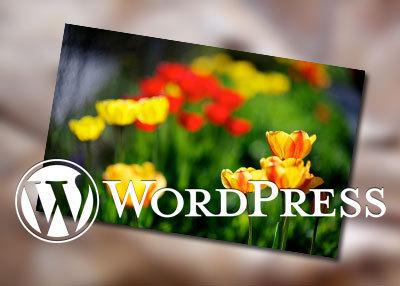 让wordpress显示打开时数据库查询次数和查询花费时间-反馈吧